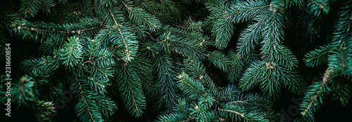 Obraz Christmas fir tree branches Background. Christmas pine tree wallpaper. Copy space.. - fototapety do salonu
