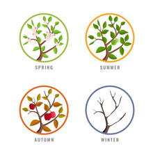 Four Season Concept With Apple Tree Season Change In Spring Summer Autumn Winter In Circle Sign Vector Design