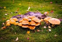 Mushrooms  And  Toad Stools