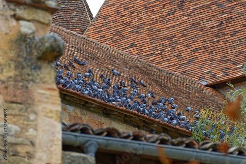 Pigeons sur toit