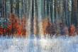 zima w lasach Warmii