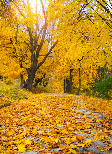 In de dag Herfst Beautiful romantic alley in a park with colorful trees and leaves. Autumn landscape