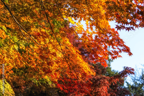 Deurstickers Baksteen autumn leaves close up in changgyeonggung