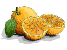 Vector Illustration Of Drawing Fruit Oranges With Halves.