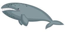 A Vector Of A Cute Gray Whale
