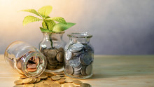 Green Plant Growing Out Of Coins In Currency Glass Jar On Wooden Table. Saving Money For Future Retirement. Business Growth. Financial Investment Concept