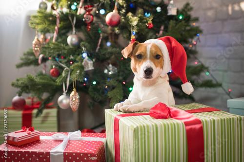 dog under the christmas tree © Evgenia Tiplyashina