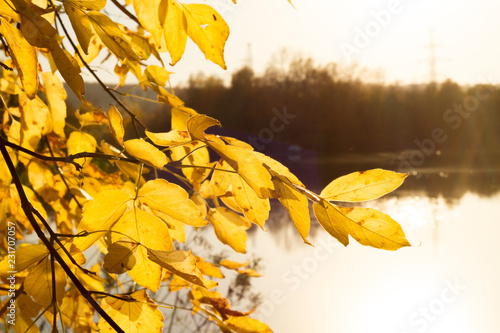 Spoed Foto op Canvas Oranje Soft autumn landscape, reflected in calm water
