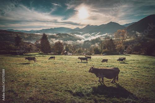 Papiers peints Vache Troupeau de vache au lever du jour