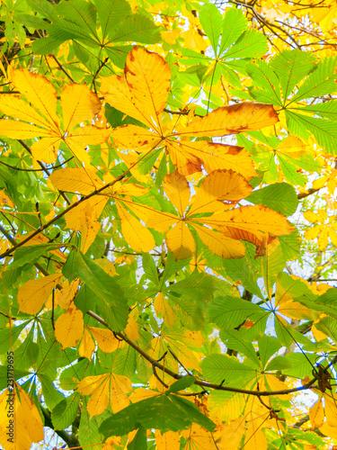 Fotografía  image of yellow autumn leaves