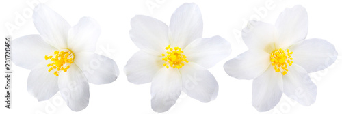 Single jasmine flowers isolated Poster Mural XXL