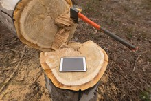 Digital Tablet On Tree Stump In Forest