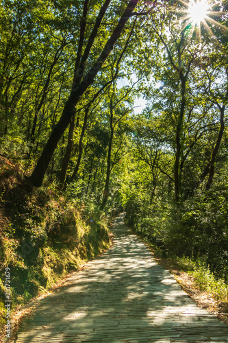 Foto op Plexiglas Weg in bos chemin de promenade en forêt