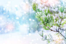 Winter Christmas Background With Snowy Pine Branch