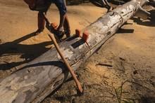 Lumberjack Cutting Fallen Tree...