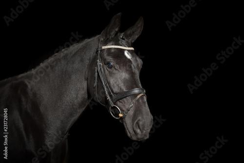 Fototapety, obrazy: Pferd vor schwarzem Hintergrund