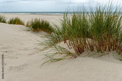 Holländische Dünenlandschaft © wttbirdy