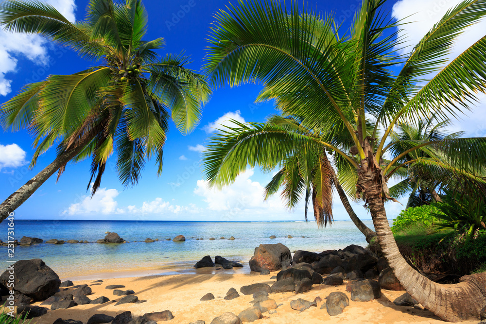 Fototapeta Palm trees in Kauai Hawaii in the morning