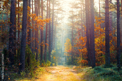 Spoed Foto op Canvas Weg in bos Sunny autumn forest