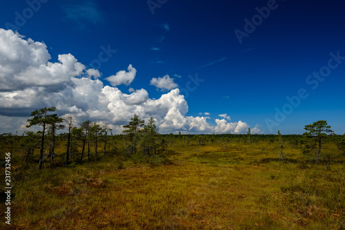Foto op Canvas Nachtblauw empty swamp landscape with water ponds and small pine trees