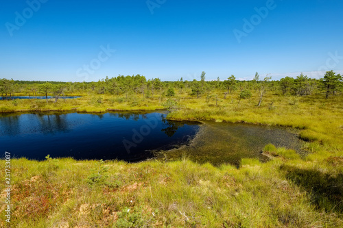 Spoed Foto op Canvas Honing empty swamp landscape with water ponds and small pine trees