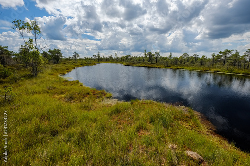 Foto op Plexiglas Bleke violet empty swamp landscape with water ponds and small pine trees