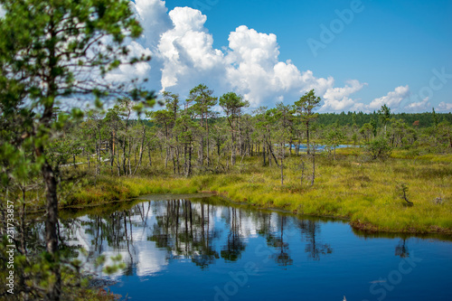 Canvas Prints Blue empty swamp landscape with water ponds and small pine trees