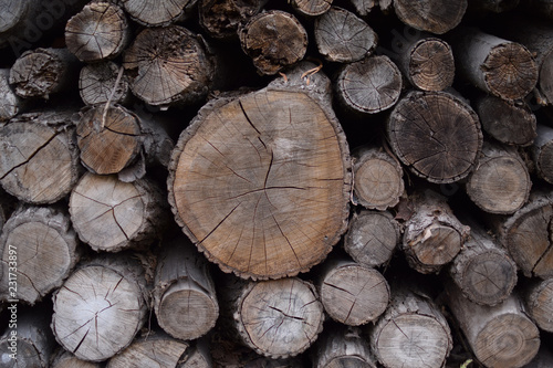 Fotografía  Pile of old wood logs. Wood texture, background.