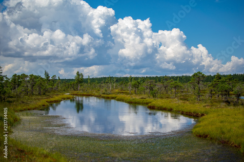 Spoed Foto op Canvas Blauwe jeans empty swamp landscape with water ponds and small pine trees