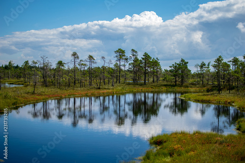 Deurstickers Blauw empty swamp landscape with water ponds and small pine trees