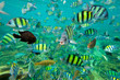 canvas print picture Tropical Fish