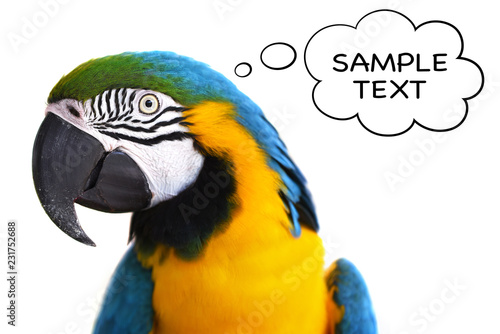 Keuken foto achterwand Papegaai Papagei + Textblase