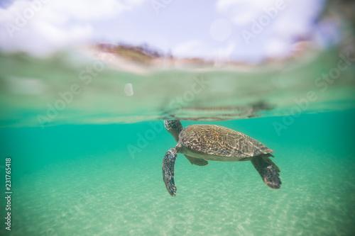 Foto op Aluminium Schildpad tartaruga marinha em noronha