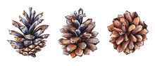 Collection Of Realistic Watercolor Illustrations Of The Pine Cones On White Background.