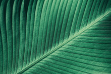 Palm Leaf, Abstract Green Texture Background