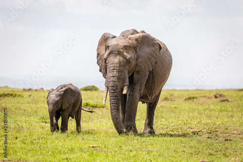 Photo  Mother and baby elephants