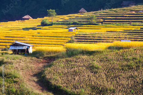 In de dag Oranje Terraced Rice Field in Pabongpiang Chiangmai Thailand.