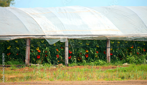 greenhouse with tomato plants and other vegetables Canvas Print