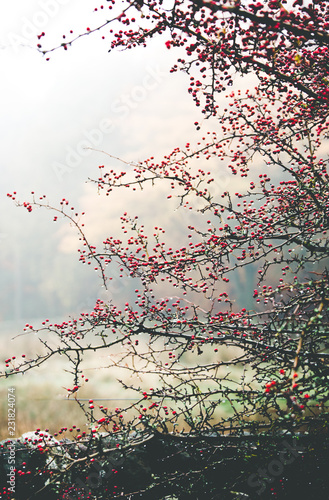 Poster Nature red blossom