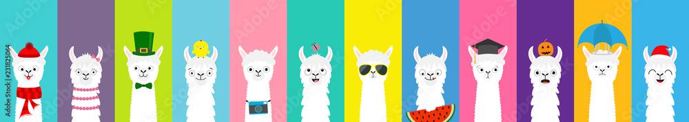 Fototapeta Llama alpaca set. Cute funny cartoon lama character. All seasons. Happy Valentines Christmas St Patrick day Easter Egg Bird Chicken Umbrella. Santa hat, sun Flat design Colorful background.
