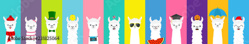 Photo  Llama alpaca set