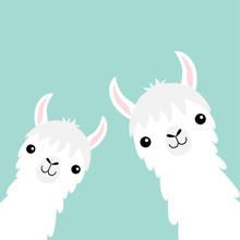 Two Llama Alpaca Animal Set. Face Neck. Fluffy Hair Fur. Cute Cartoon Funny Kawaii Character. Childish Baby Collection. T-shirt, Greeting Card, Poster Template Print. Flat Design. Blue Background.
