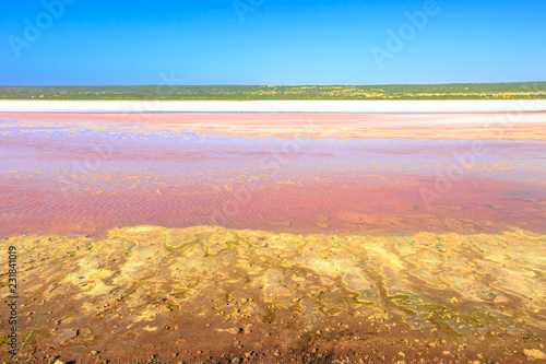 Foto op Aluminium Oceanië Pink Lake in Port Gregory Road at Gregory in Western Australia. The Hutt Lagoon is a pink color for the presence of Dunaliella algae. Popular attraction between Geraldton and Kalbarri, Australia.
