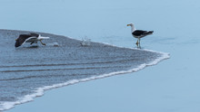 A Seagull Watching Another Pre...