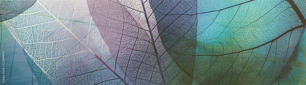 Fototapety, obrazy: abstract pattern with ornamental leaves, decorative ceramic tile