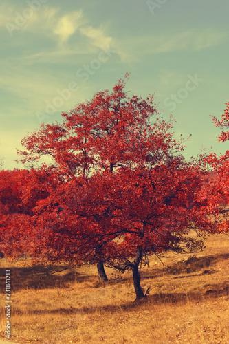 Poster Lichtroze Autumn red tree scene. Dramatic autumn landscape.