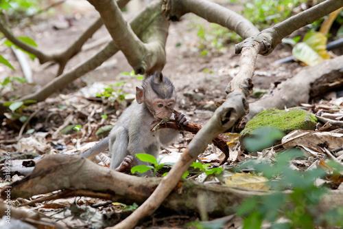 Foto op Plexiglas Aap little monkey in the forest