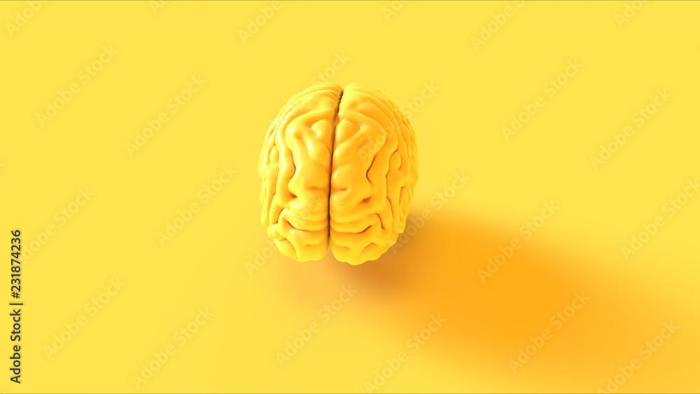 Fototapety, obrazy: Yellow Human brain Anatomical Model 3d illustration 3d rendering