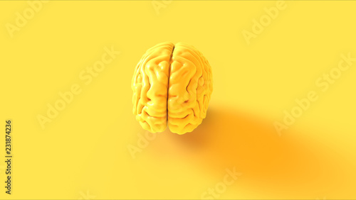 Leinwanddruck Bild - paul : Yellow Human brain Anatomical Model 3d illustration 3d rendering