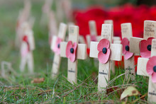 Remembrance Poppies On Wooden Crosses, To Commemorate The Loss Of Servicemen In World Wars And Conflicts. An Annual International Event In November.